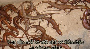 Con rắn mối bò vào nhà có điềm báo gì, tốt hay xấu?