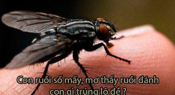 Con ruồi số mấy, mơ thấy ruồi đánh con gì trúng lô đề?