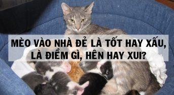 Mèo vào nhà đẻ tốt hay xấu, là điềm gì, hên hay xui?