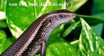 Con rắn mối số mấy, mơ thấy con rắn mối đánh số mấy ?