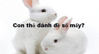 Con thỏ số mấy, mơ thấy thỏ đánh đề con gì?
