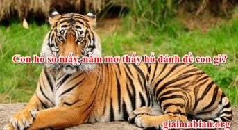 Con hổ số mấy, nằm mơ thấy hổ đánh đề con gì?