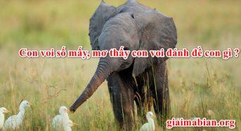 Con voi số mấy, mơ thấy con voi đánh đề con gì ?