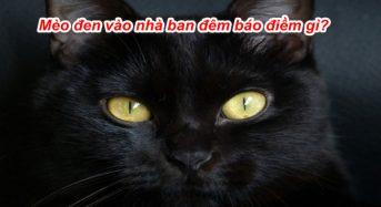 Mèo đen vào nhà ban đêm là điềm gì, tốt hay xấu?