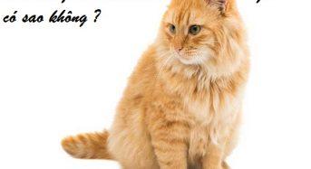 Mèo vàng vào nhà ban đêm là điềm gì, có sao không, đánh con gì, số mấy?