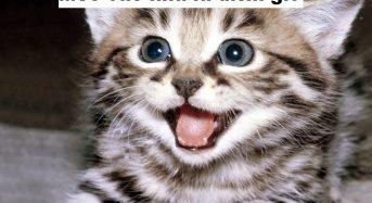 Mèo vào nhà là điềm gì, tốt hay xấu, hên hay xui?
