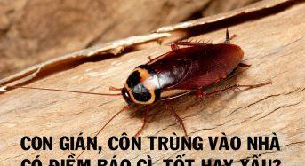 Con gián, côn trùng vào nhà có điềm báo gì, tốt hay xấu?