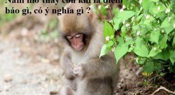 Nằm mơ thấy con khỉ là điềm báo gì, có ý nghĩa gì ?