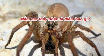 Nằm mơ thấy nhện là điềm báo gì, đánh con gì, đánh số mấy?