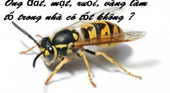 Ong đất, mật, ruồi, vàng làm tổ trong nhà có tốt không ?