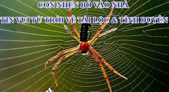 Con nhện bò vào nhà: tin vui từ trời về tài lộc & tình duyên