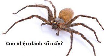 Con nhện đánh số mấy? Giải mã bí ẩn lô đề con nhện!