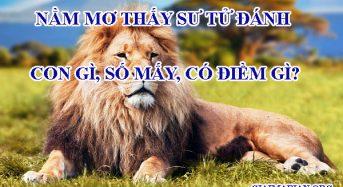 Nằm mơ thấy sư tử đánh con gì, số mấy, có điềm gì?