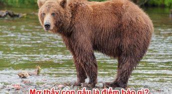 Nằm mơ thấy con gấu là điềm báo gì? Đánh con gì? Số mấy?