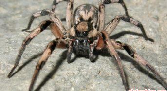 Nằm mơ thấy nhện là điềm báo gì? Đánh con gì? Số mấy?