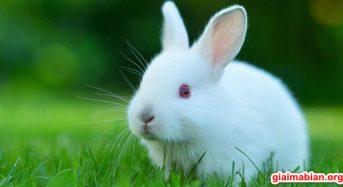 Nằm mơ thấy con thỏ là điềm báo gì? Đánh con gì? Số mấy?
