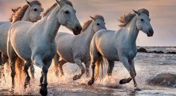 Nằm mơ thấy con ngựa là điềm báo gì? Đánh con gì? Số mấy?