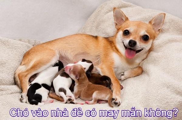 cho-vao-nha-de-co-may-man-khong